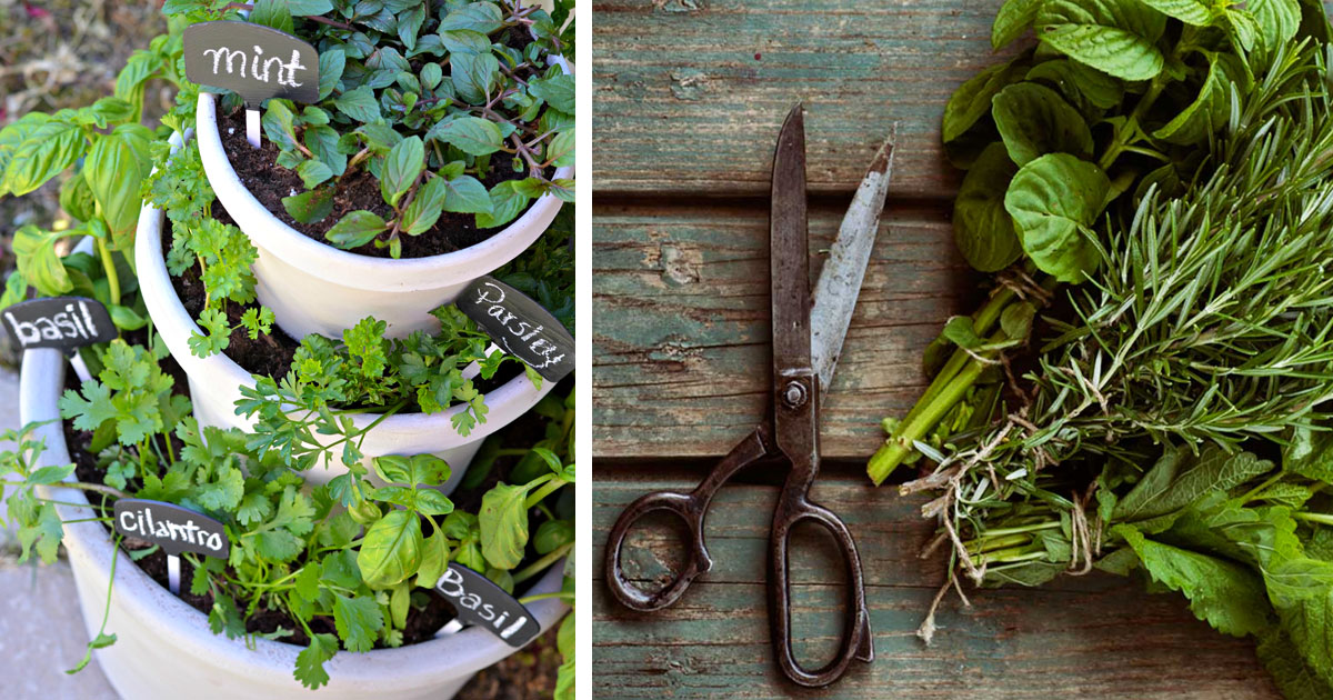 This is how you'll grow a wonderful spice garden at home that will last forever!