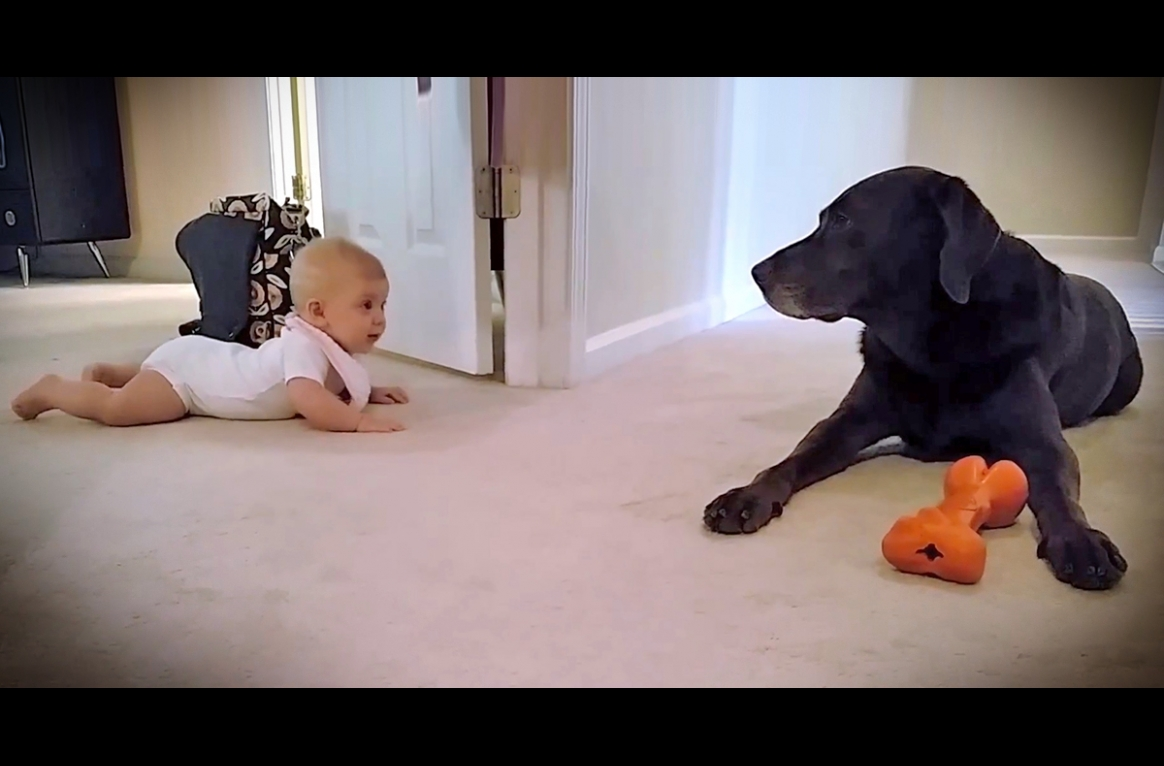 The dog saw his little sister crawling for the first time, and his reaction will melt your heart