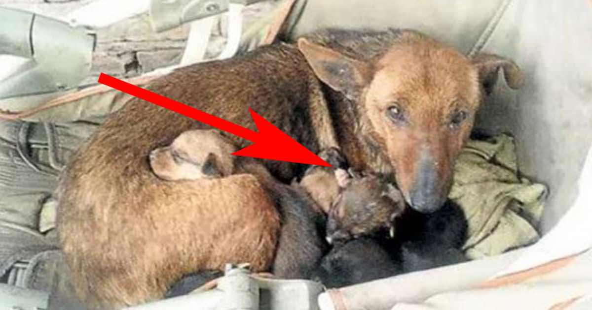 A woman found a street dog with six puppies - she looked closely and saw a small hand peeking with them