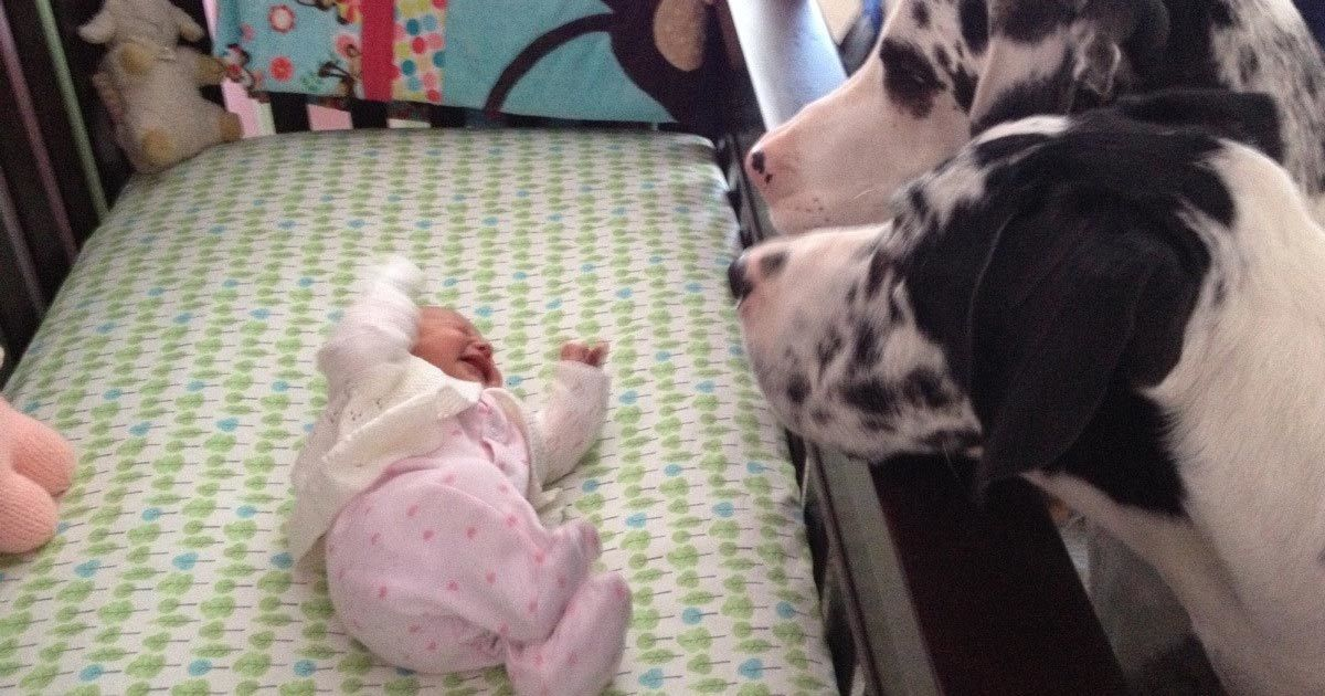 7 heart-melting images of dogs that meet babies for the first time