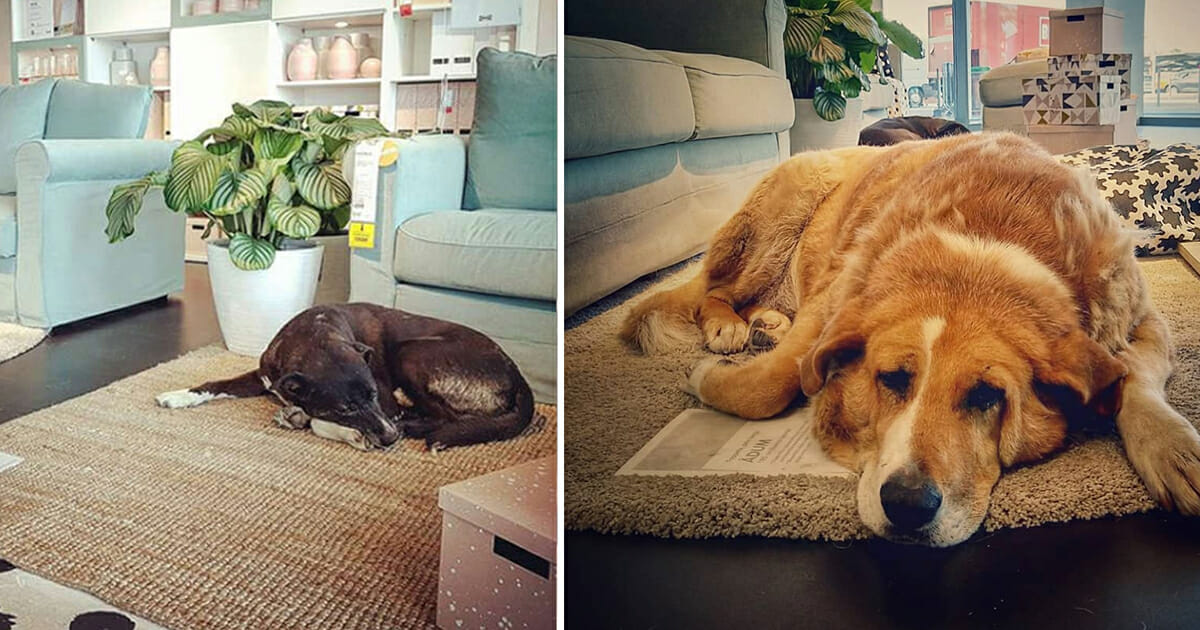 A known furniture store opened its doors to help keep stray dogs away from the cold