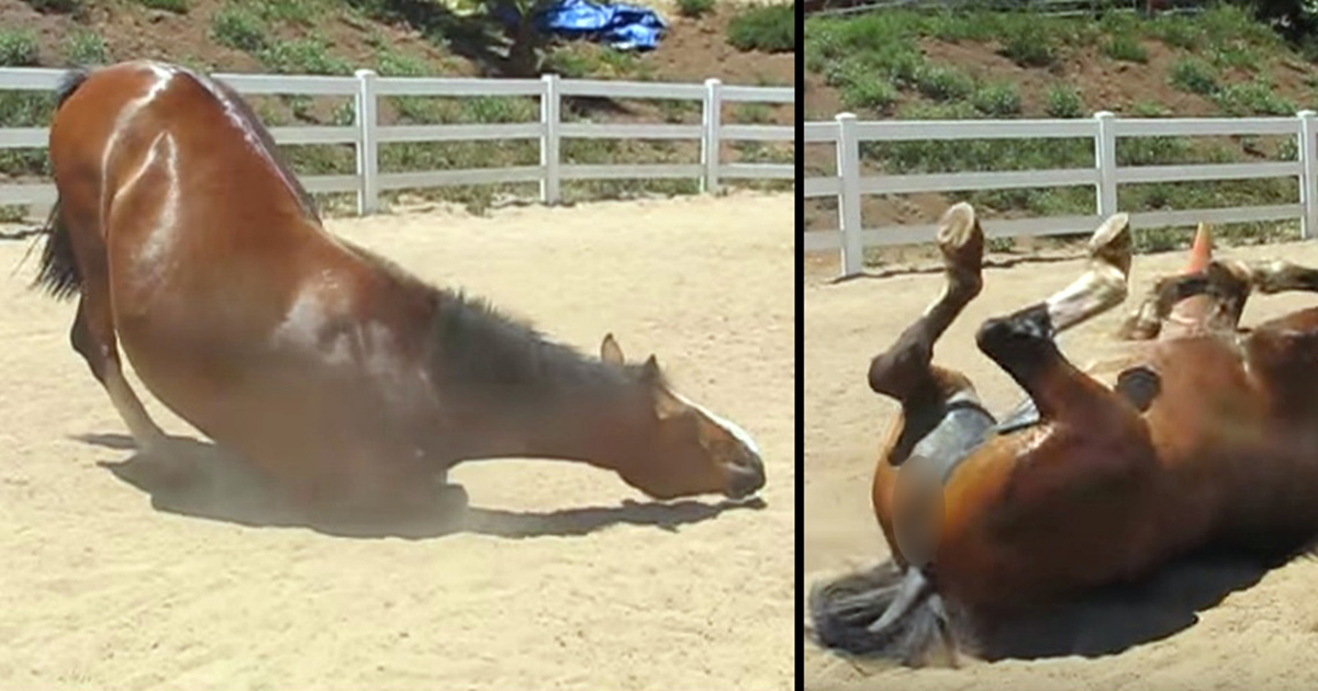 A huge horse farts like there's no tomorrow - the amazing video has been watched more than 13 million times