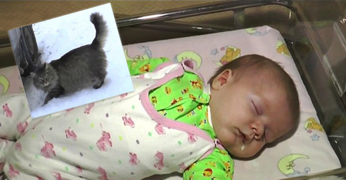 A homeless cat noticed a baby on the frozen street. What she did stunned the whole world!
