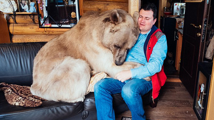 An orphan bear cub was rescued by a russian couple, but they didn't expect a 150-pound bear to become part of their family