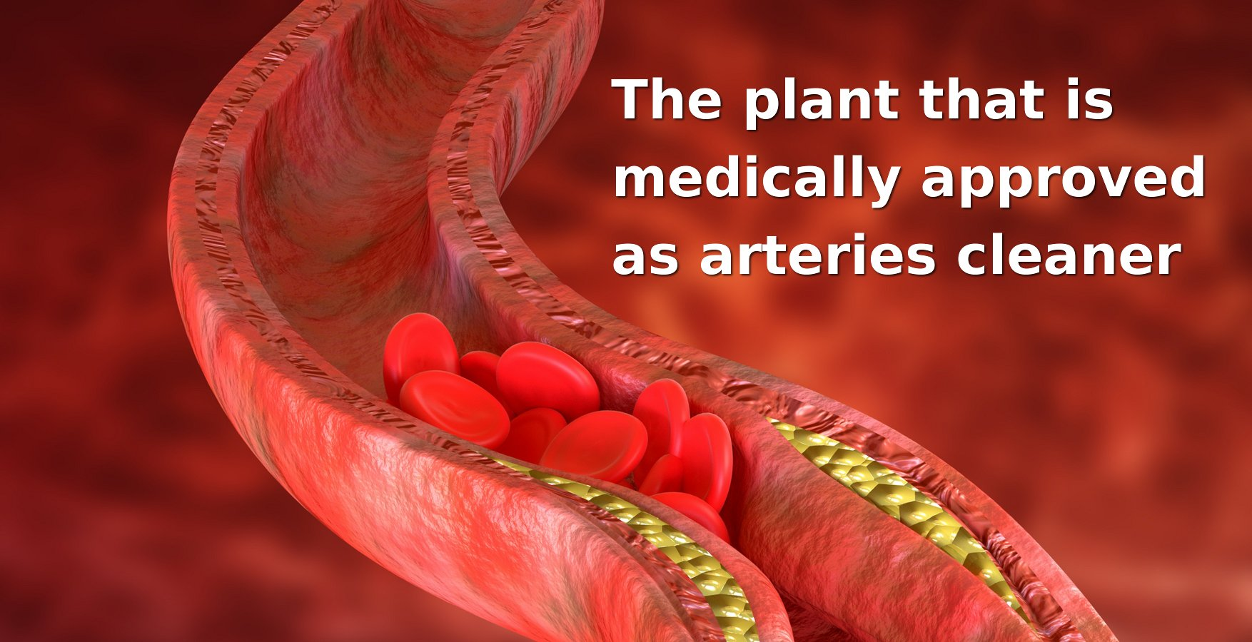 The plant that has been clinically proven to cleanse the arteries in the body