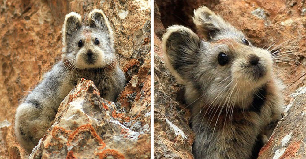 A rare animal known as 'The Magic Rabbit' has been observed for the first time in 20 years