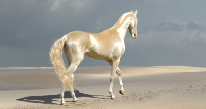 Meet the rare creature that people call 'The Most Beautiful Horse in The World'