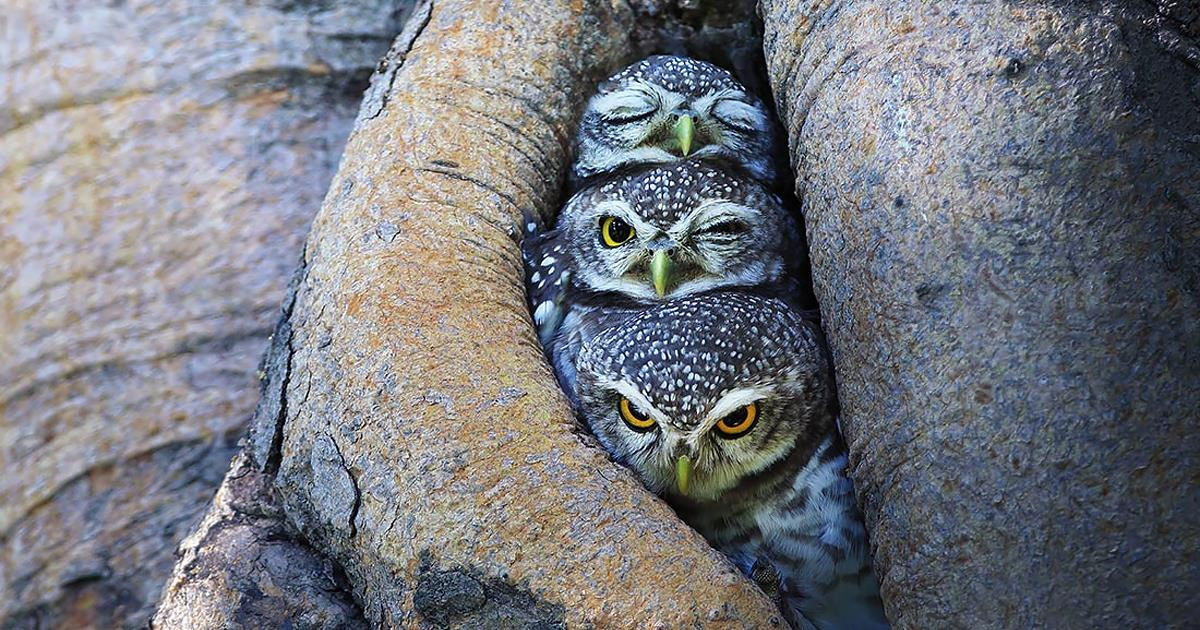 A photographer documented owls as you've never seen them before in a series of breathtaking images